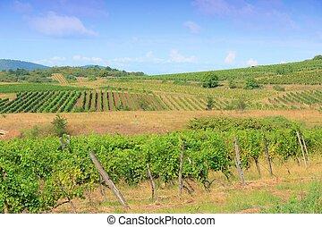 Hungary wine land