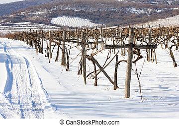 hungría, sarospatak, región, wineyards, tokaj
