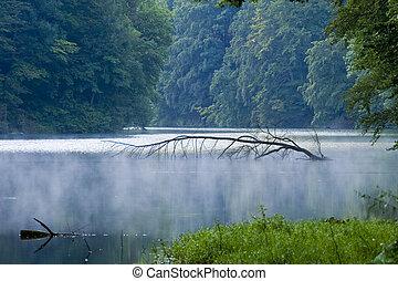 hungría, tropical, árbol, lago, tranquilo, agua, brillante,...