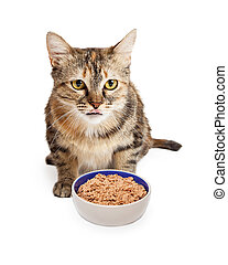 Hungry Cat With Bowl of Food