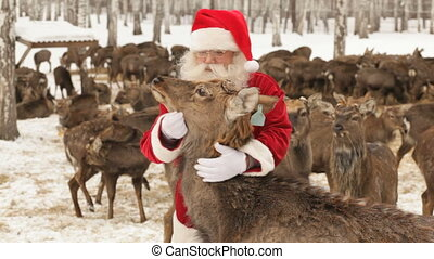 Hungry deer trying to get to food while Santa caressing it