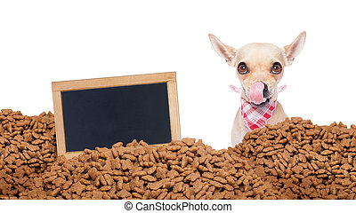 hungry dog behind mound food - hungry chihuahua dog behind a...
