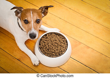hungry dog bowl - hungry jack russell dog behind food bowl...