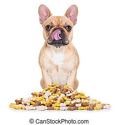 hungry dog - hungry french bulldog dog behind a big mound or...