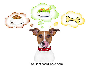 hungry dog - hungry jack russell dog thinking about the...