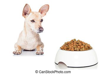 hungry dog with bowl