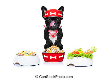hungry dog with food bowls