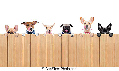 hungry dogs - row of dogs as a group or team , all hungry...