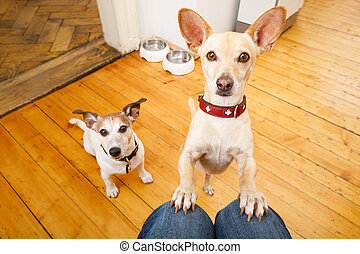 hungry dogs with food bowl