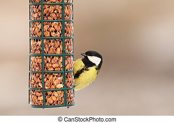 hungry great tit on bird feeder