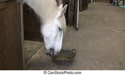 Hungry horse playing with food skip - Hungry white horse...