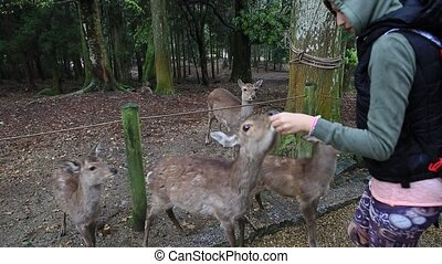 hungry Nara deer - Tourist woman surrounded by popular...