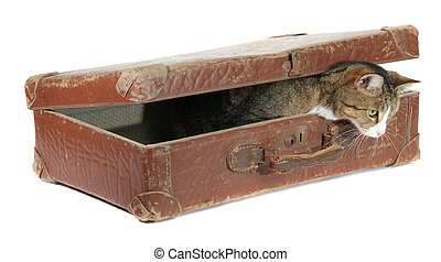 hungry pet in old brown suitcase