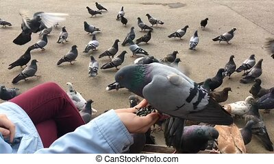 Hungry pigeons sitting on woman's hand and eating sunflower seeds