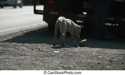 Hungry Roadside Dog, Central America - Close-up low-angle ...