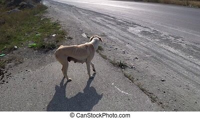 hungry stray dog, hungry dog wags its tail and goes away, ...