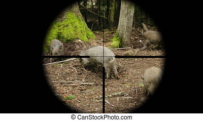Hunter takes aim at a wild pig in the forest, view through a...
