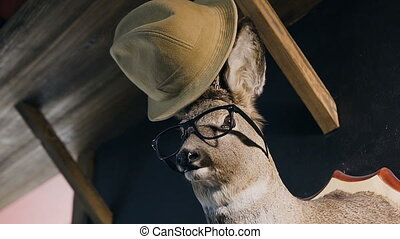 Hunter trophy - deer in the glasses and hat on the head. The deer head hanging on the wall in the indoor. Stuffed animal with antlers. Stuffed deer head