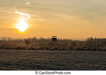 Hunting bryony in surise in cold temperature