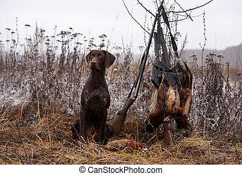 hunting dog - a gun dog sitting near to pheasants and shots