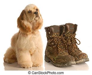 hunting dog - american cocker spaniel sitting beside pair of...