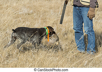 Hunting Dog and hunter - A hunting dog retrieving a grouse ...