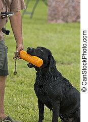 Hunting dog at heel - Training a hunting dog
