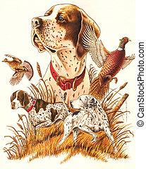 Hunting - Dog.