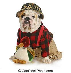 hunting dog - english bulldog dressed up like a hunter on...