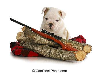 hunting dog - english bulldog puppy sitting behind wooden ...