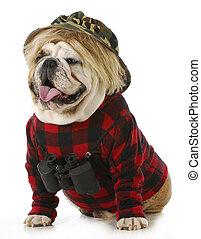 hunting dog - english bulldog wearing binoculars and hunting...