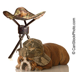 hunting dog - english bulldog wearing camo hat laying beside...