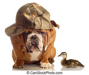 hunting dog - english bulldog with hunting hat sitting ...