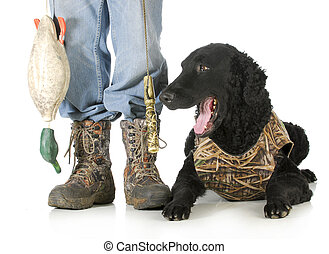 hunting dog -man hunter and curly coated retriever isolated ...
