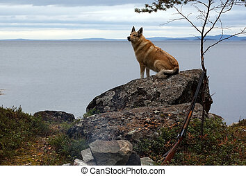 Hunting dog on the cliff by the sea