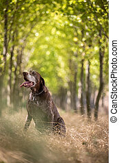 Hunter's dog in the woods