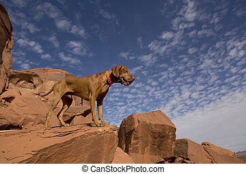 hunting dog outdoors