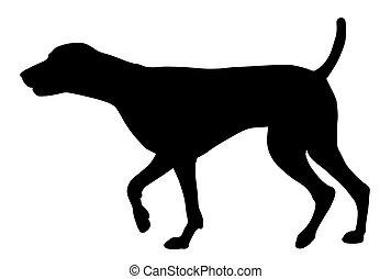 Hunting dog - Vector illustration of german short hair ...