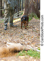 hunting dog with hunter in forest