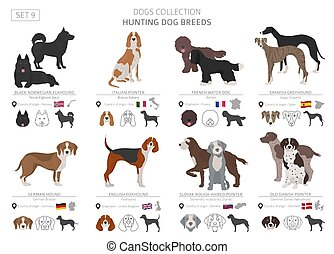Hunting dogs collection isolated on white. Flat style....