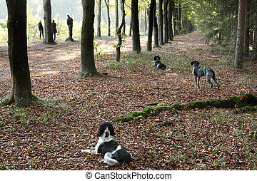 hunting dogs paying attention during training - three ...
