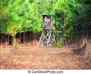 Hunting in Pine Thicket - Deer stand is tucked away in a...