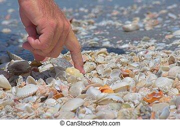 hunting shells - enjoying day at ocean side in florida ...