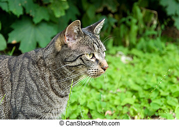 hunting tabby cat in front of green background in nature