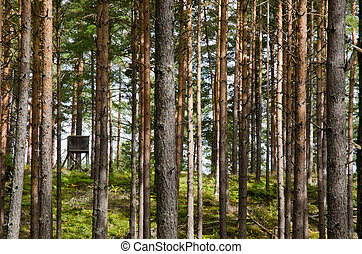 Hunting tower in a pine tree forest