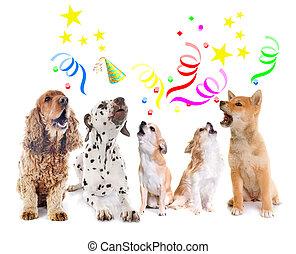 hurlement, anniversaire, chiens