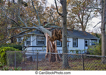 Hurricane Damage - A tree felled by hurricane Sandy lands on...