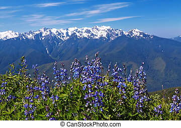 Hurricane Ridge, Olympic National Park, Washington, USA