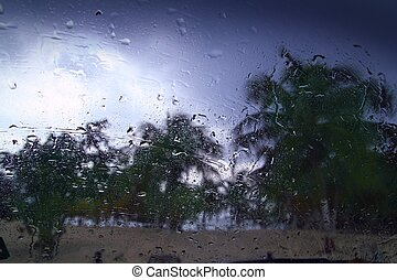 Hurricane tropical storm palm trees from car inside window glass water drops
