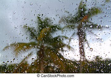 Hurricane tropical storm palm trees from inside car - ...